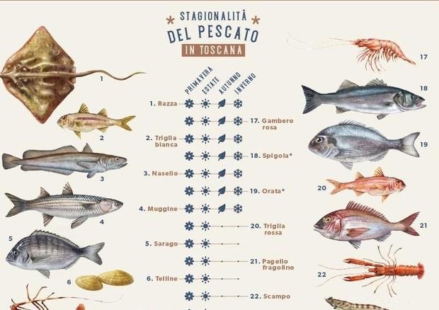 Calendario Attuale.Calendario Del Pescato Toscano Regione Toscana