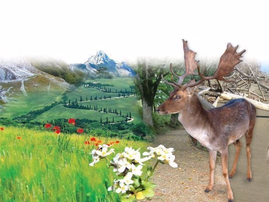 estate nei parchi parchi e aree protette ambiente