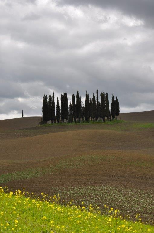 Cipresseta a San Quirico d'Orcia