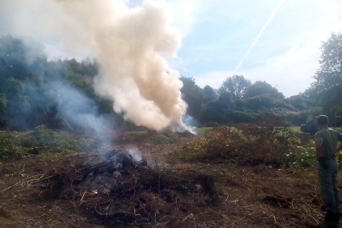 Abbruciamento di residui vegetali norme comune di - Comune bagno a ripoli imu ...