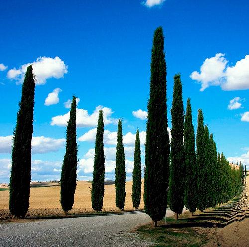 In Toscana la prenotazione del soggiorno si fa (gratis) sul ...